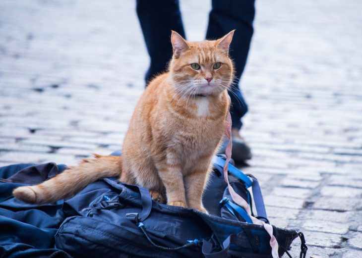 a_street_cat_named_bob_43008912_st_1_s-high